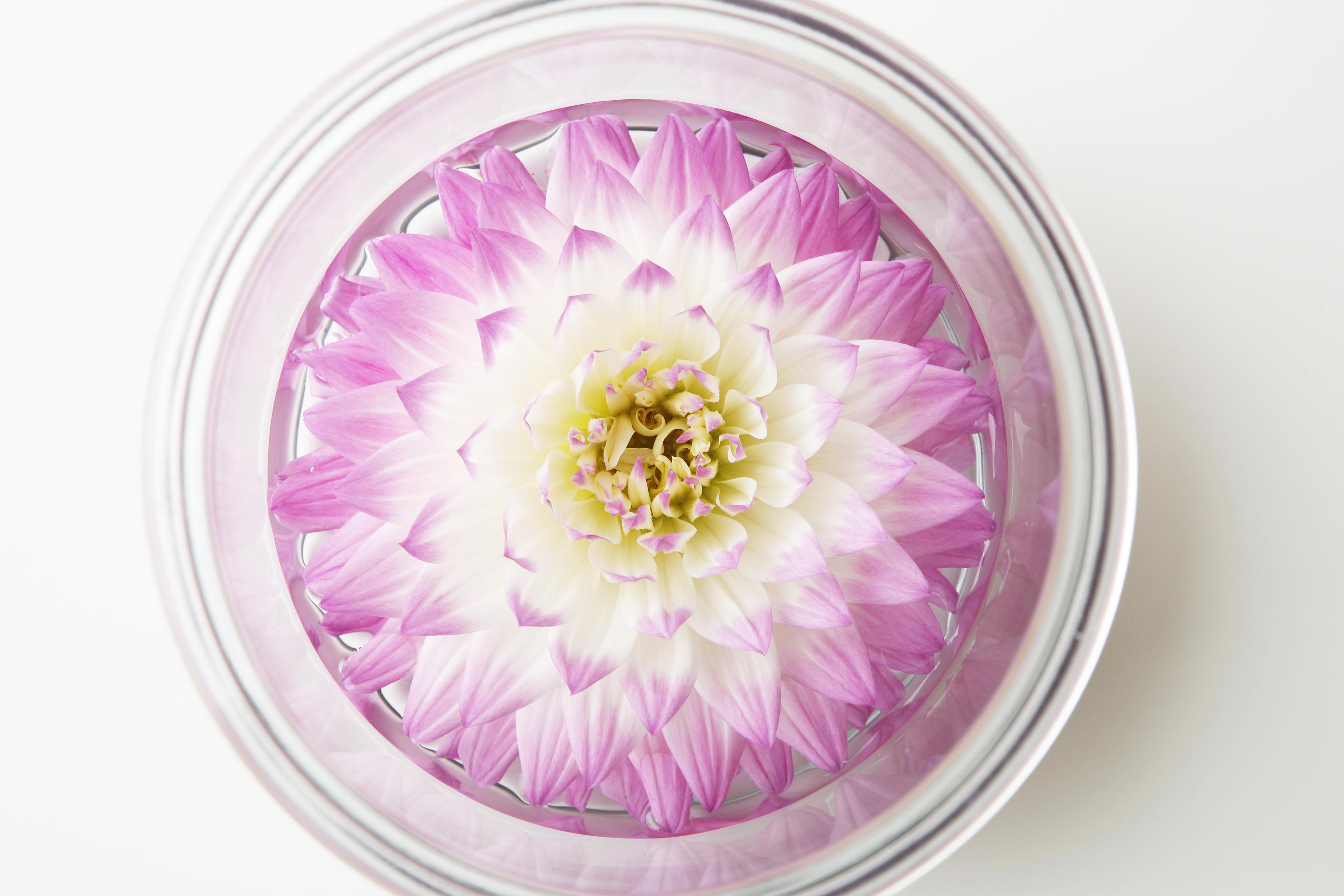 ダリアの花瓶